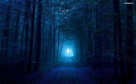 wallpaper blue forest dark blue forest walldevil