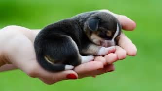 Mrwallpaper com wallpapers beagle dog puppy 1920x1080 jpg
