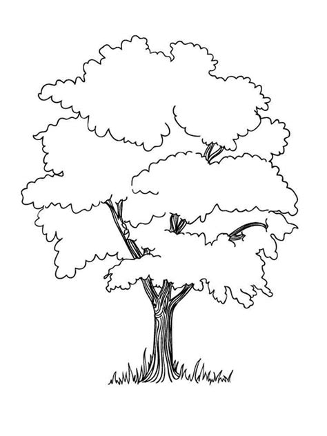 Deciduous Tree Coloring Page | deciduous trees coloring coloring pages