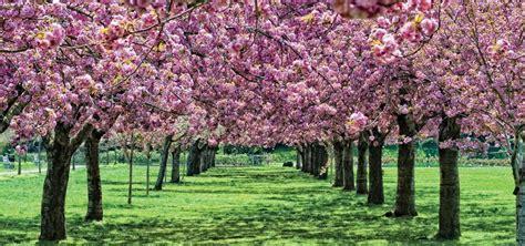 giardini nel mondo i 10 giardini pi 249 belli mondo doveviaggi it