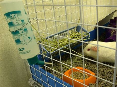How To Make A Hay Rack For Guinea Pigs by 1000 Images About Hay Rack Litter Box Ideas On