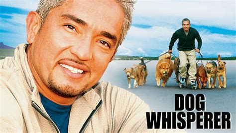 whisperer with cesar millan whisperer with cesar millan 2004 for rent on dvd dvd netflix