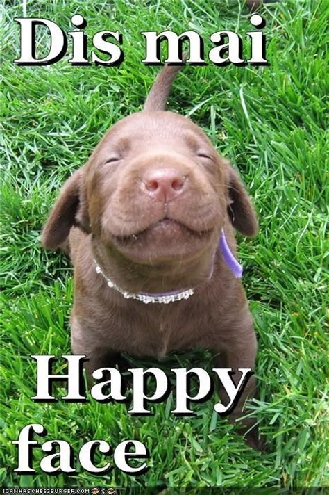 happy face funny dog meme puppy dogs pinterest