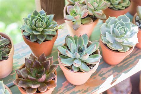 Beginner S Guide To Growing Succulents Garden - how to grow succulents a comprehensive guide