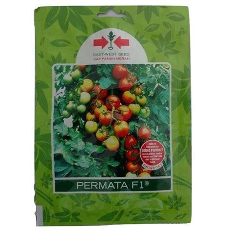 jual benih tomat permata f1 150 biji murah bibitbunga