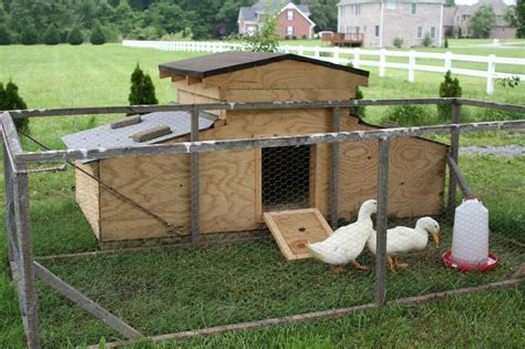 backyard duck house plans home design and style