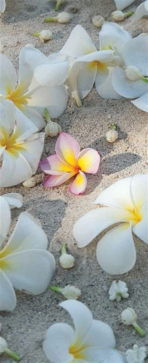 black lotus tattoo vero beach 99 best images about plumeria on pinterest watercolors