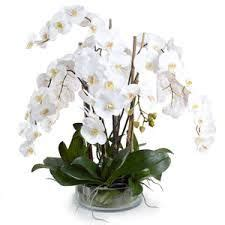 Lifelike White Phalaenopsis Orchids With Staghorn Ferns White Orchid Silver Pot Decoration House Interiors
