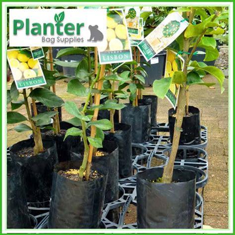 Poly Planter Bags by 5 Litre Premium Poly Planter Bags Planter Bag Supplies