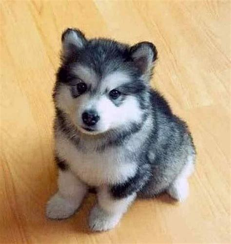 puppies that stay small small dogs small breeds and breeds on