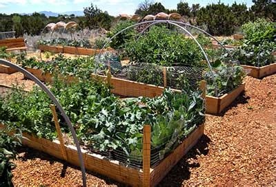 community gardens home grown new mexico