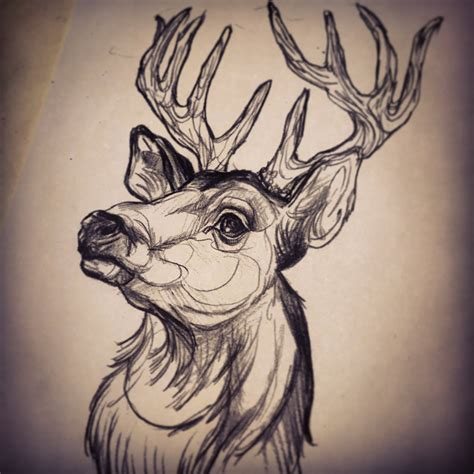 tattoo sketchbook deer by dicknosetengu on deviantart
