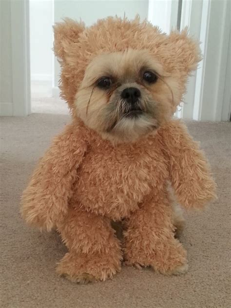 how to make a walking teddy bear costume for your dog make
