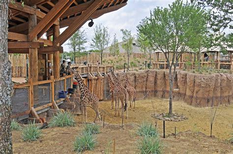 drive zoo texas dallas zoo giants of the savanna exhibit sedalco
