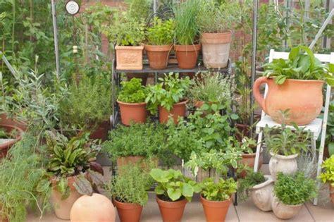 coltivare piante aromatiche in vaso piante aromatiche coltivare casa vaso balcone non sprecare