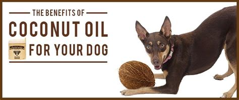 is coconut safe for dogs coconut for dogs the ultimate guide