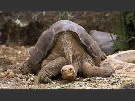 imagenes sorprendentes de animales gigantes un vistazo a lo que hemos perdido 10 fotograf 237 as de