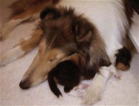 can you touch newborn puppies newborn puppies care of the newborn puppy