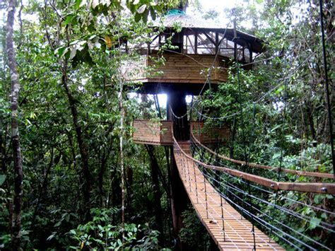treehouse community treehouses around the world