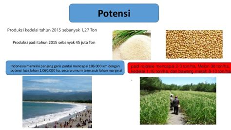 Bibit Padi Rojolele management of coastal marginal areas into agricultural
