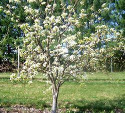 Fiber Soil Asian Pear Uncommon Fruit