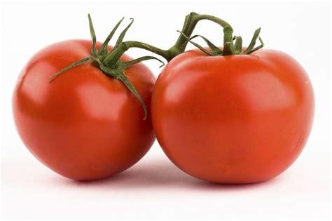 pomodori in vaso concime concimazione pomodoro concime come concimare i pomodori