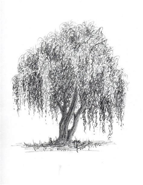 weeping willow tree drawing by swati singh