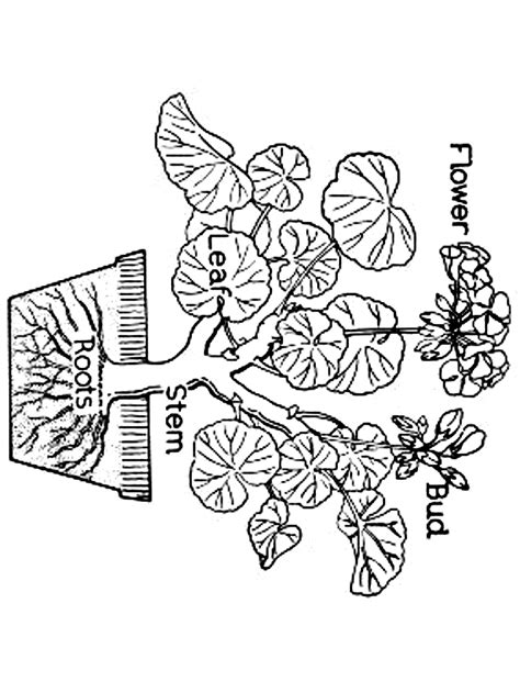 free coloring pages primary games flowers colouring new calendar template site