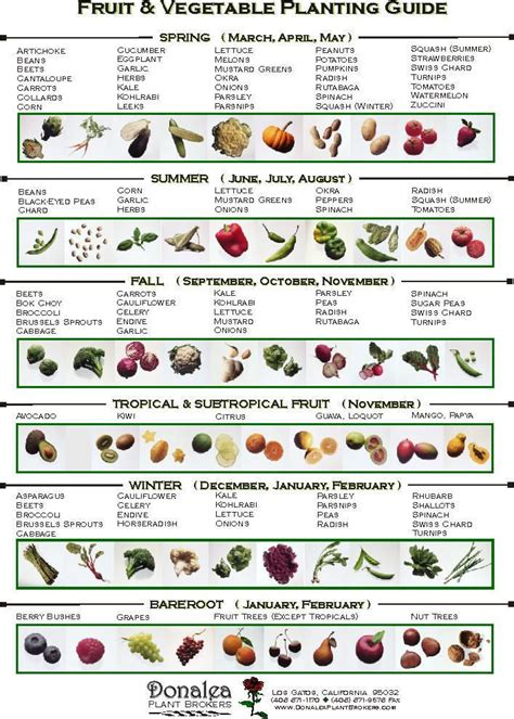garden chart when to plant vegetables perfect for our soon to be new