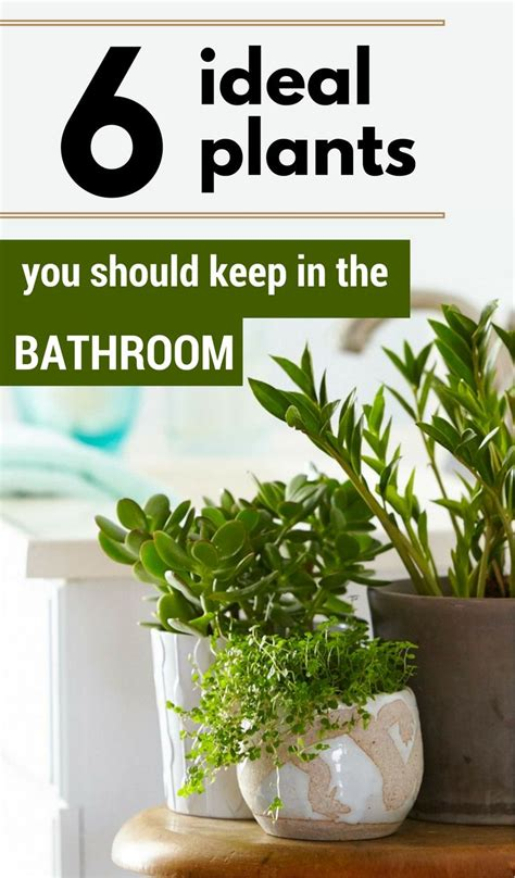 plants to keep in bathroom 25 best ideas about inside plants on pinterest low