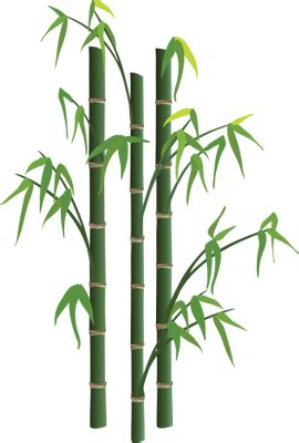 bamboo tree png   icons  png backgrounds