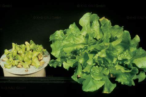 s n vegetables k s kali gmbh vegetables n