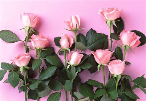 wallpaper bunga tumbrl gambar bunga mawar pink dan daunnya pernik dunia