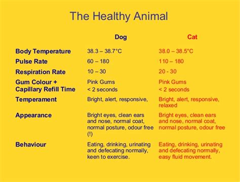 dogs normal temp itp march 2013 caroline allenden basic care for dogs and cats