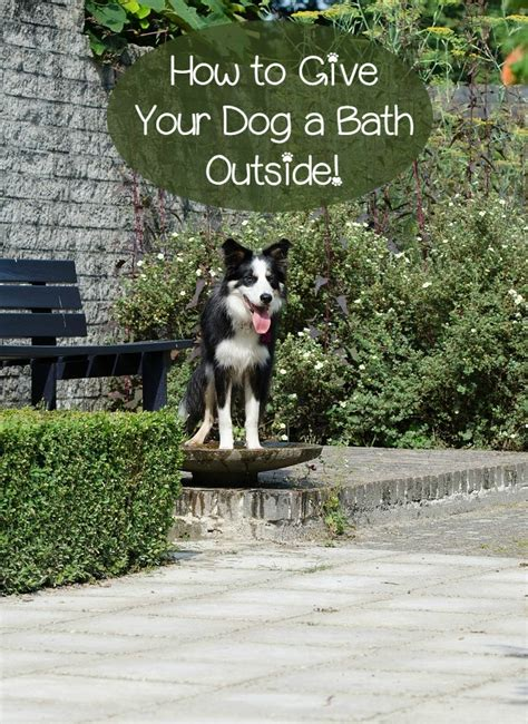 when to give a puppy a bath how to give your a bath outside