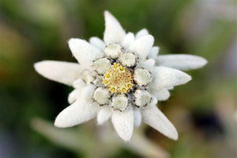 la stella alpina fiore hotel r best hotel deal site