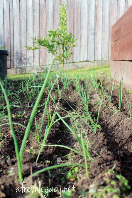winter vegetable gardening grow fresh food at home