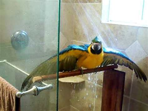 In The Shower by Macaw In The Shower