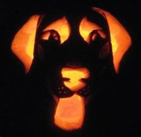 lab pumpkin pattern 1000 images about halloween on pinterest bride of