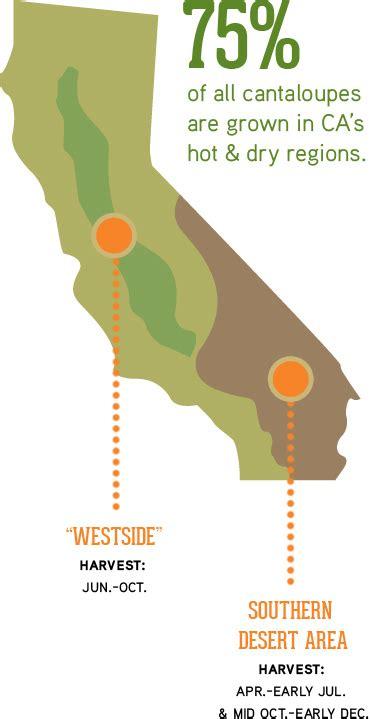 Food Giveaways Bakersfield Ca - growing regions california cantaloupes