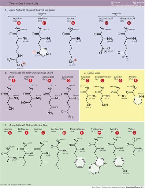 diagram of amino acid tag molecular bibsonomy