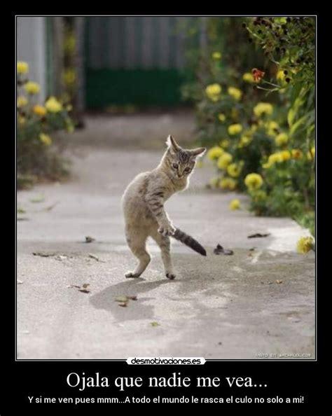 imagenes animales chistosos imagenes de inventos chistosos 2 memes graciosos y