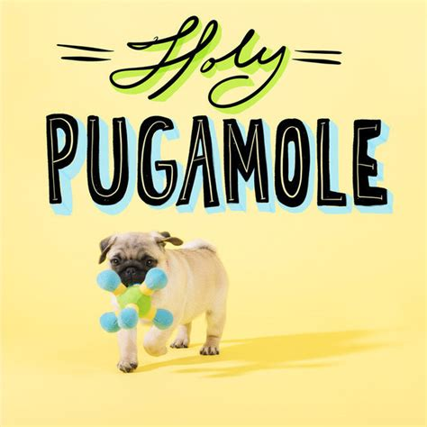 pug pun pug puns that will brighten your day omnifeed
