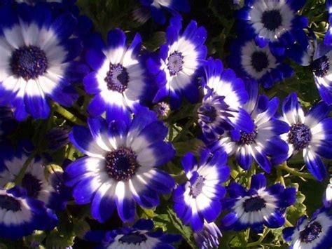 flower screensaver wallpaper flowers wallpapers daertube