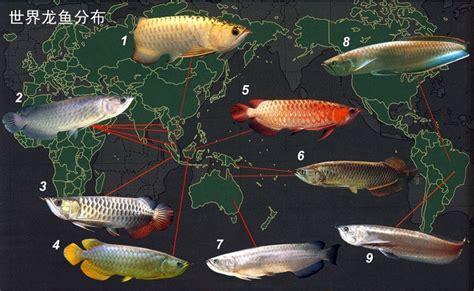 Anakan Arwana Green Pino gallery jenis jenis ikan arwana ferboes