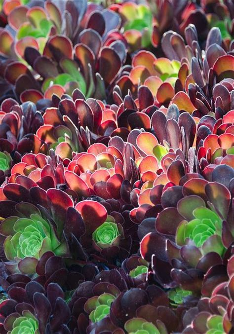 200 best images about colorful succulents cactus on pinterest gardens plant pathology and