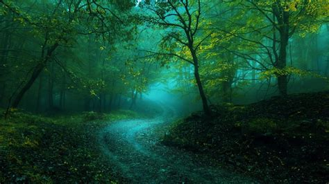 misty curvy forest path  ultrahd wallpaper wallpaper