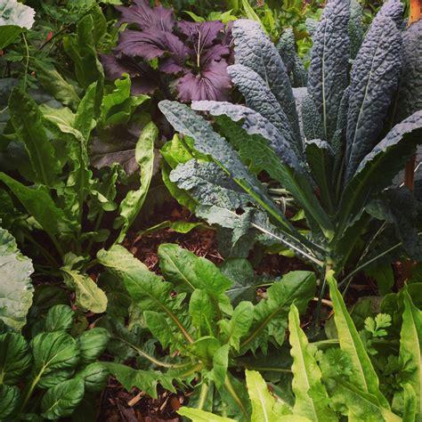Ready To Grow Gardens Planting Organic Vegetables Herbs Garden Ready Vegetable Plants