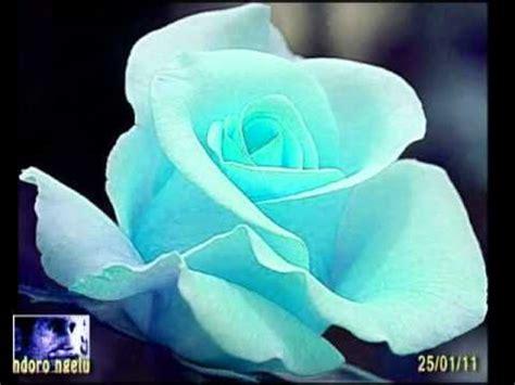 Standar Bunga Mawar 63 koes plus setangkai mawar bunga