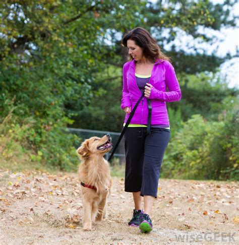 golden retriever pros and cons what are the pros and cons of colloidal silver for dogs